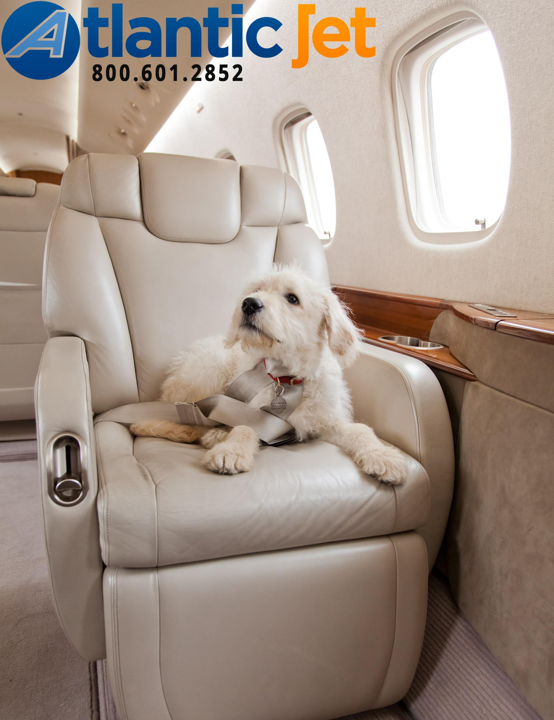 Private Chartering with Pets